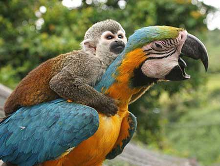 دنیای دیدنی و عجیب حیوانات (عکس)