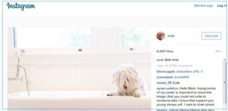 سگی که دو میلیون طرفدار دارد! (عکس)