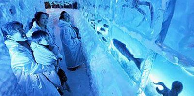 آکواریوم عجیب یخی در کسنوما در ژاپن (عکس)
