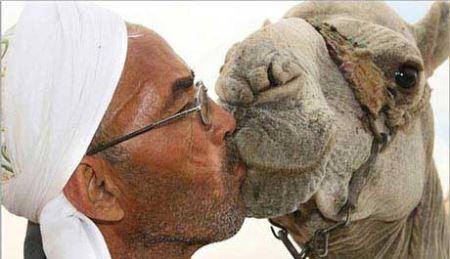 بوسه های شتری عرب ها رسانه ای شد!! (عکس)
