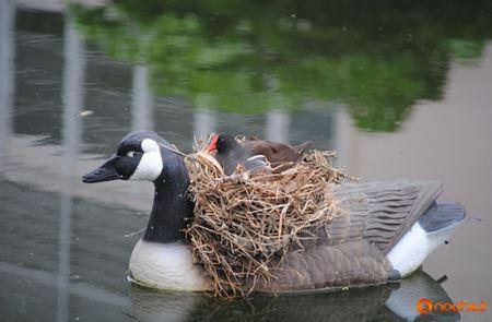 عجیب ترین جاهایی که پرندگان لانه گذاشتند! (عکس)