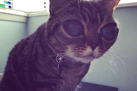 گربه ای که بخاطر چشمهایش معروف ش (عکس)