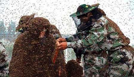 رکورد جالب مرد چینی با تحمل 2 هزار نیش زنبور (عکس)