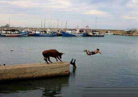 خنده دارترین عکس ها از کشورهای مختلف