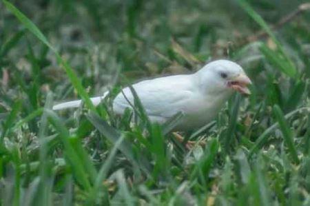 دیدنی از غریب ترین پرنده در جهان!! (عکس)