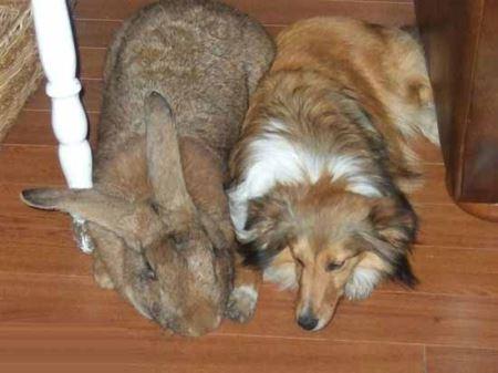 غول پیکرترین حیوانات جهان (عکس)