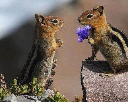 منتخب با حال ترین عکس های خنده دار حیوانات