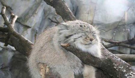 عکس های دیدنی و جالب نادرترین گربه جهان