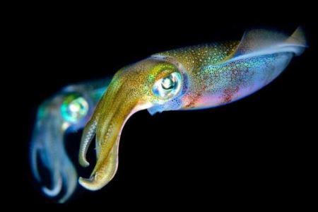 هیولاهای دیدنی اعماق دریا (عکس)