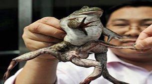 حیوانات جهش یافته عجیب و غریب دنیا (عکس)