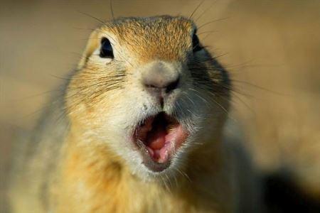 عکس های فوق العاده خنده دار از حیوانات سوپرایز شده!