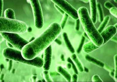 باورنکردنی از اولین باغ وحش میکروب ها !! (عکس)