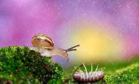 رویایی ترین عکس های حیوانات