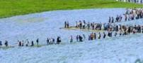 تابلوی نقاشی طبیعی پارک ساحلی هیتاچی (عکس)