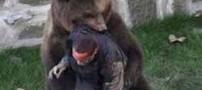 جزئیات داغ جدال خونین یک کوهنورد با یک خرس