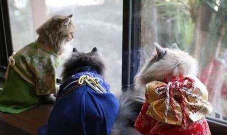 گربه های فشن کیمونو پوش ! (عکس)