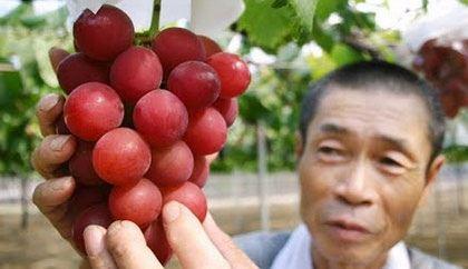 خوشه انگور 27 میلیون تومانی سوژه داغ جهان (عکس)