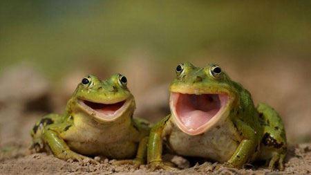 خنده دارترین عکس های تازه