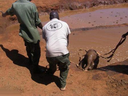 ماجرای جالب فیلی که به انسان ها اعتماد کرد (عکس)