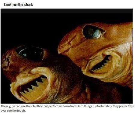 عکس هایی از حیوانات جهنمی !