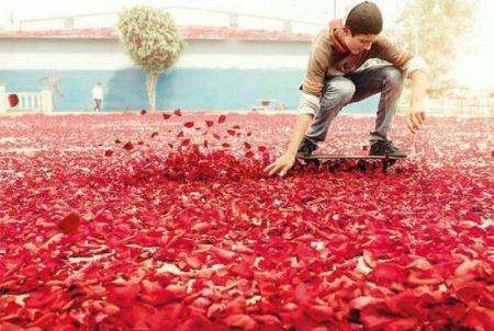 گل باران جالب تبلیغات جدید شرکت سونی (عکس)