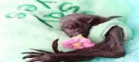 خفاش معروف و پرطرفدار در بیمارستان بستری شد! (عکس)
