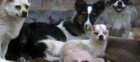 زن چینی قهرمان سگهای بی پناه شد (عکس)