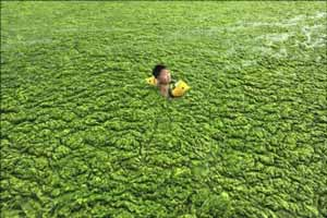 شنای چندش آور در جلبک های سبز چین! عکس