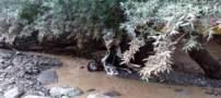 عکس های دلخراش از سیل مرگبار در چالوس