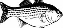 حکایت جالب صیاد ضعیف و ماهی قوی