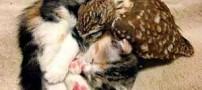 زندگی بسیار جالب گربه با جغد!! (عکس)