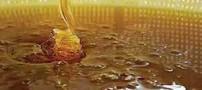 تغذیه مناسب با شناخت عسل طبیعی و تقلبی