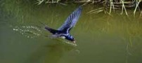 پرنده ای که فریب ظاهر انسان را می خورد