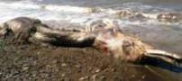 وحشت از پیدا شدن حیوانی عجیب در ساحل (عکس)