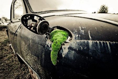 عکس های دیدنی نبرد طبیعت با دنیای مدرن