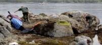 نجات هیجانی یک نهنگ قاتل در ساحل (عکس)