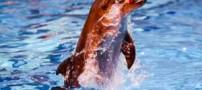 دانستنی های جالب در مورد دلفین ها
