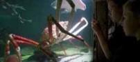 بزرگترین خرچنگ دریایی دنیا (عکس)