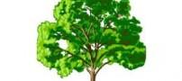 درخت مشکلات داستانی خواندنی و کوتاه