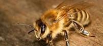 استفاده از پای حشرات فناوری را دگرگون کرد!