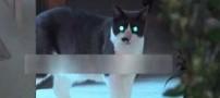 بلایی که این گربه شیطانی بر سر این زن آورد (عکس)