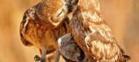 وقتی حیوانات یکدیگر را می بوسند (عکس)