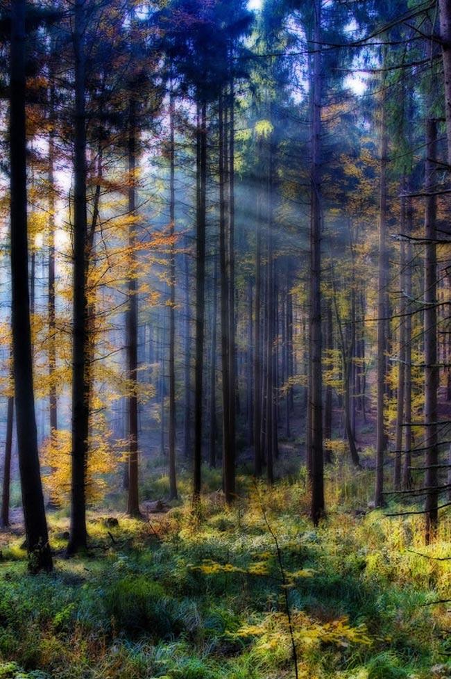 عکس های زیبا از هنرنمایی خداوند در آفرینش طبیعت
