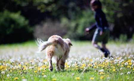 خوش رو و خوش خنده ترین سگ دنیا ! (عکس)