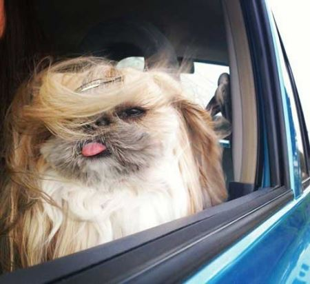 عکس های سگی که ستاره مد شبکه های اجتماعی شد!