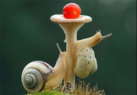 مسابقه دیدنی حلزون ها از نگاه دوربین خوش سلیقه !