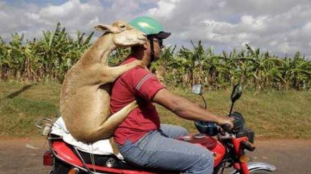 خنده دارترین عکس های عجیب از همه جا