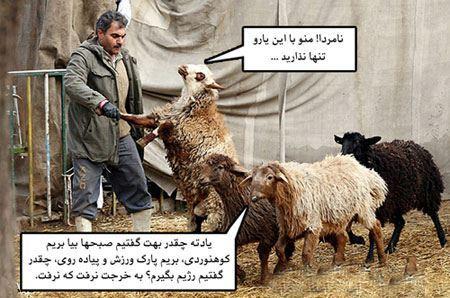 خنده دارترین عکس های روز عید قربان