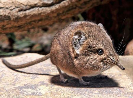 عکس عجیب ترین جانور کشف شده در کویر نامیبیا