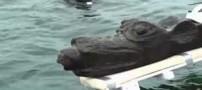 سگ عبوسی که پس از 5 قرن از دریا بیرون آمد ! (عکس)